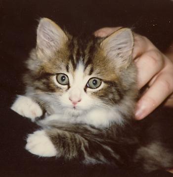 Kittenchance